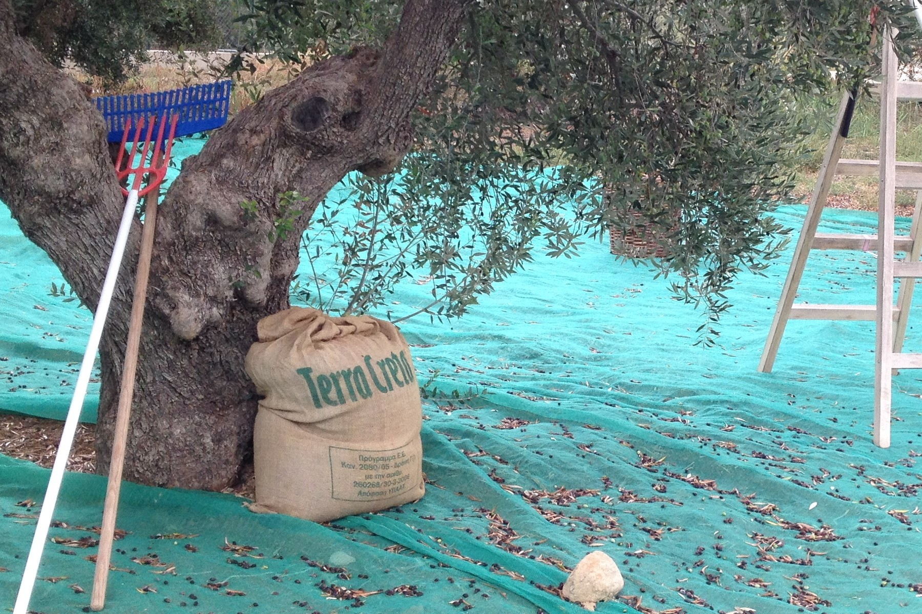Chania Tour 2. Explore the Secrets of Wine and Olives